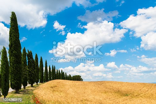 Asciano (Siena) - Characteristic Tuscan landscape with cypresses and clouds