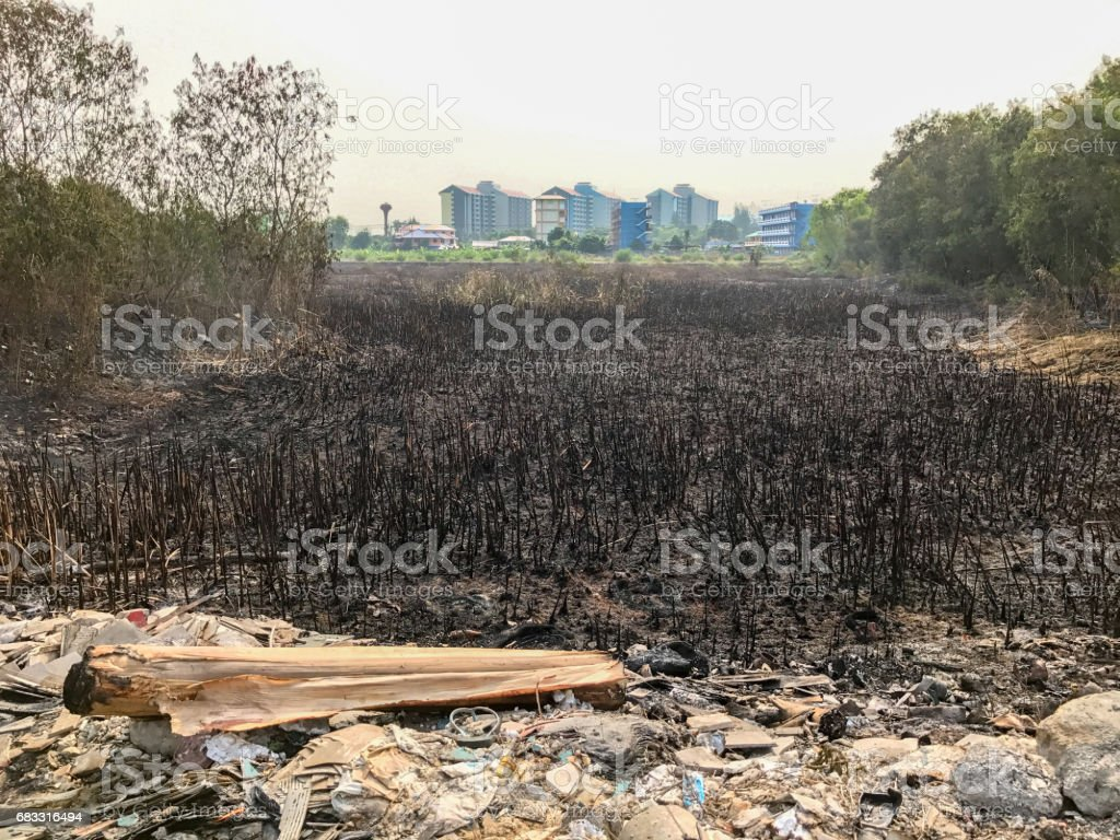 Ash from burning rice fields foto stock royalty-free