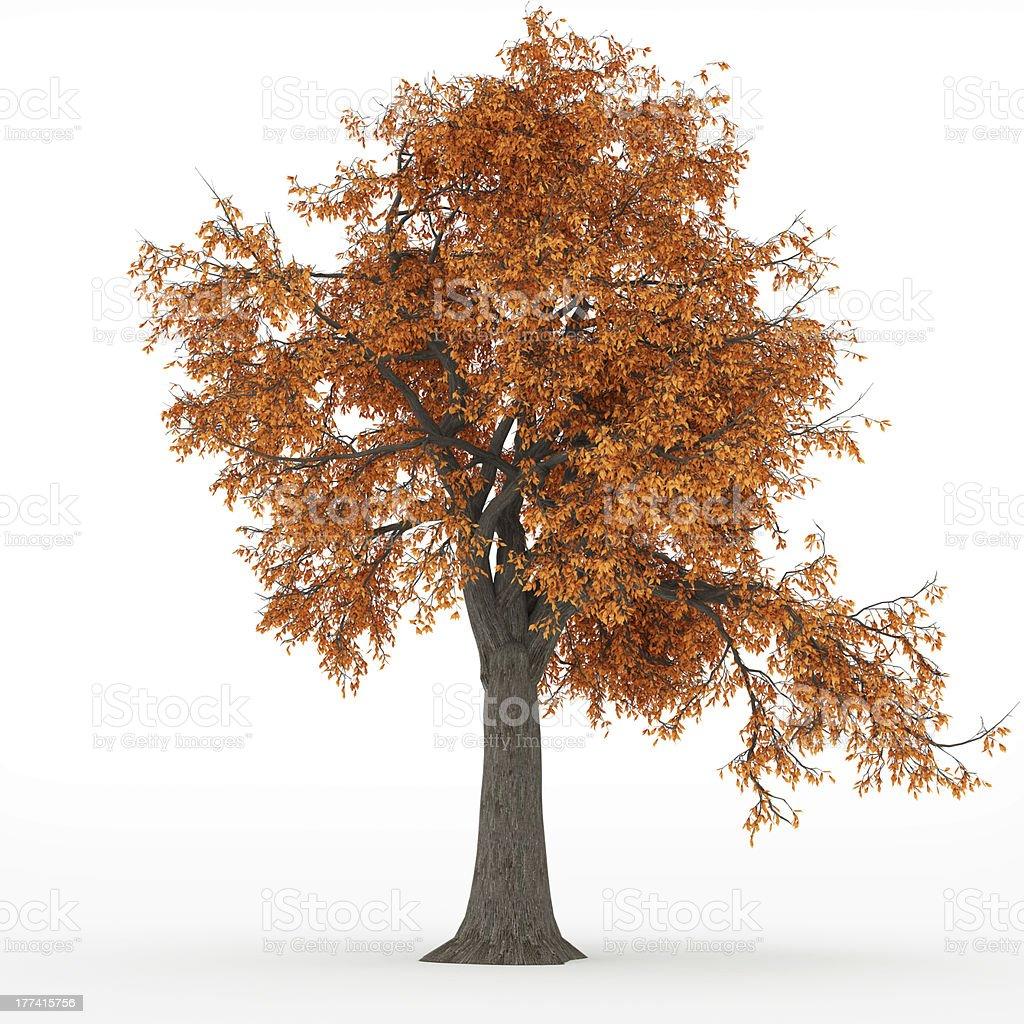 ash tree autumn in 100Mpix stock photo