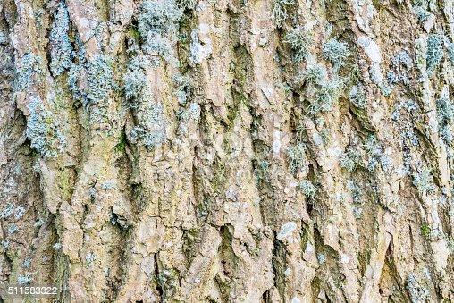 istock Ash tree bark textured detail 511583322