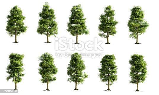 istock Ash Tree Collection 97885193