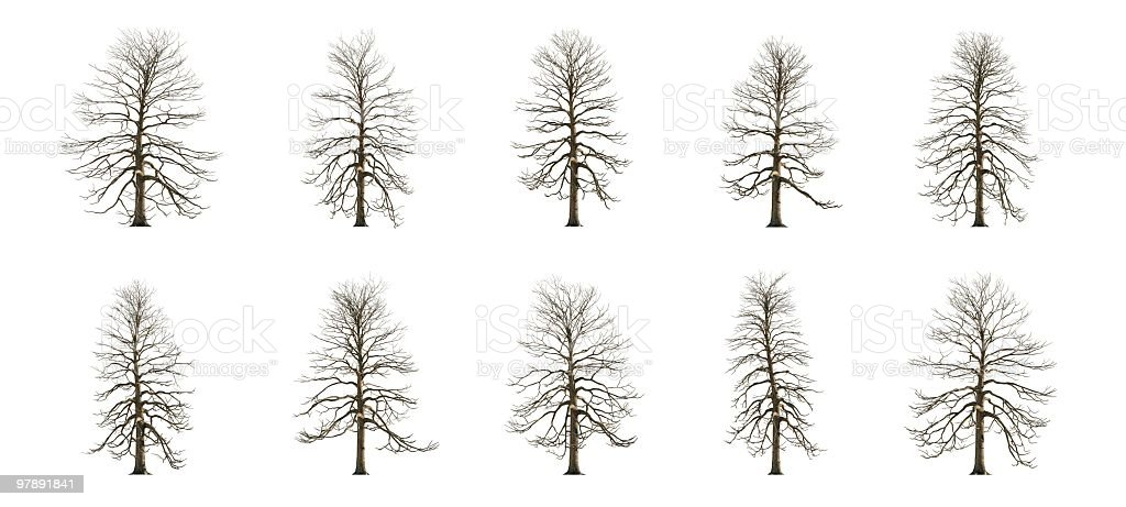 Ash Tree Winter Collection royalty-free stock photo