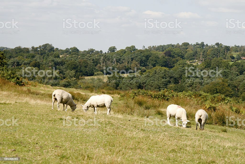Ashdown Forest in East Sussex, England stock photo