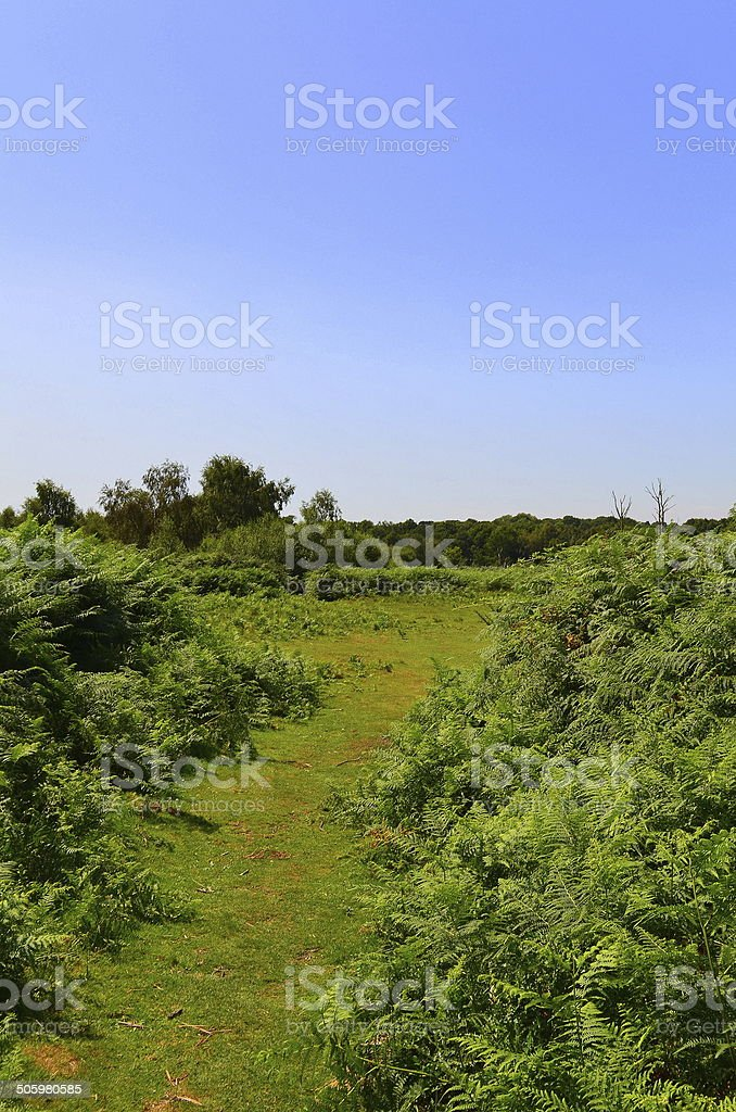 Ashdown Forest in Southern England. stock photo