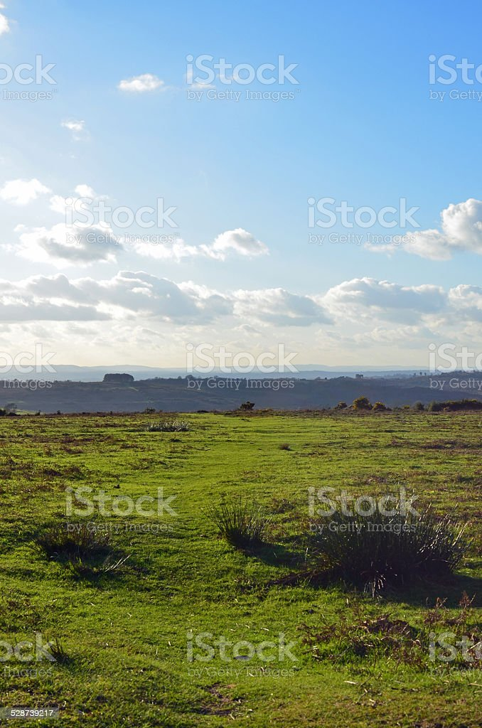 Ashdown Forest, Sussex, England. stock photo