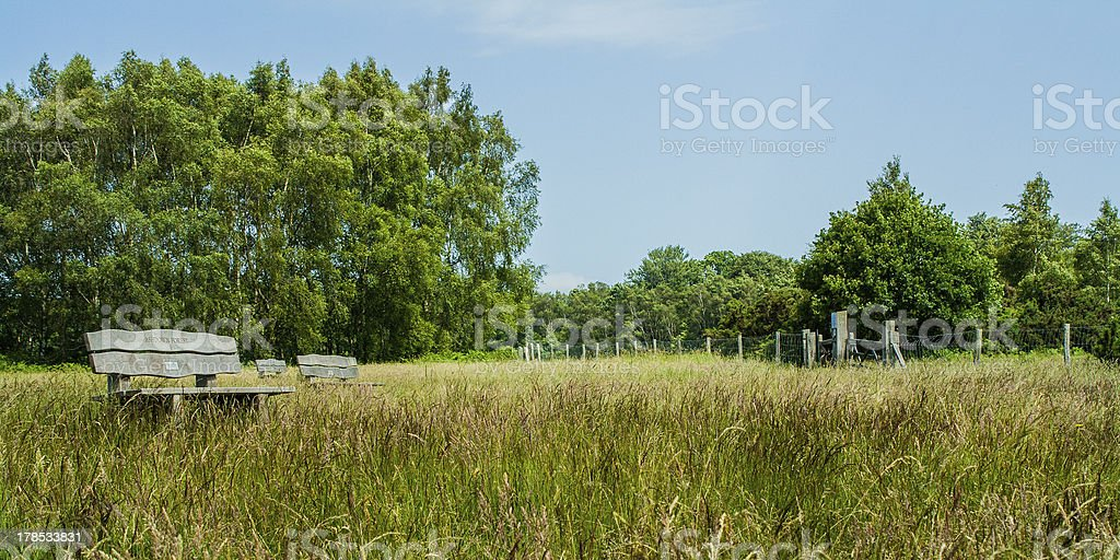 Ashdown forest Sussex stock photo