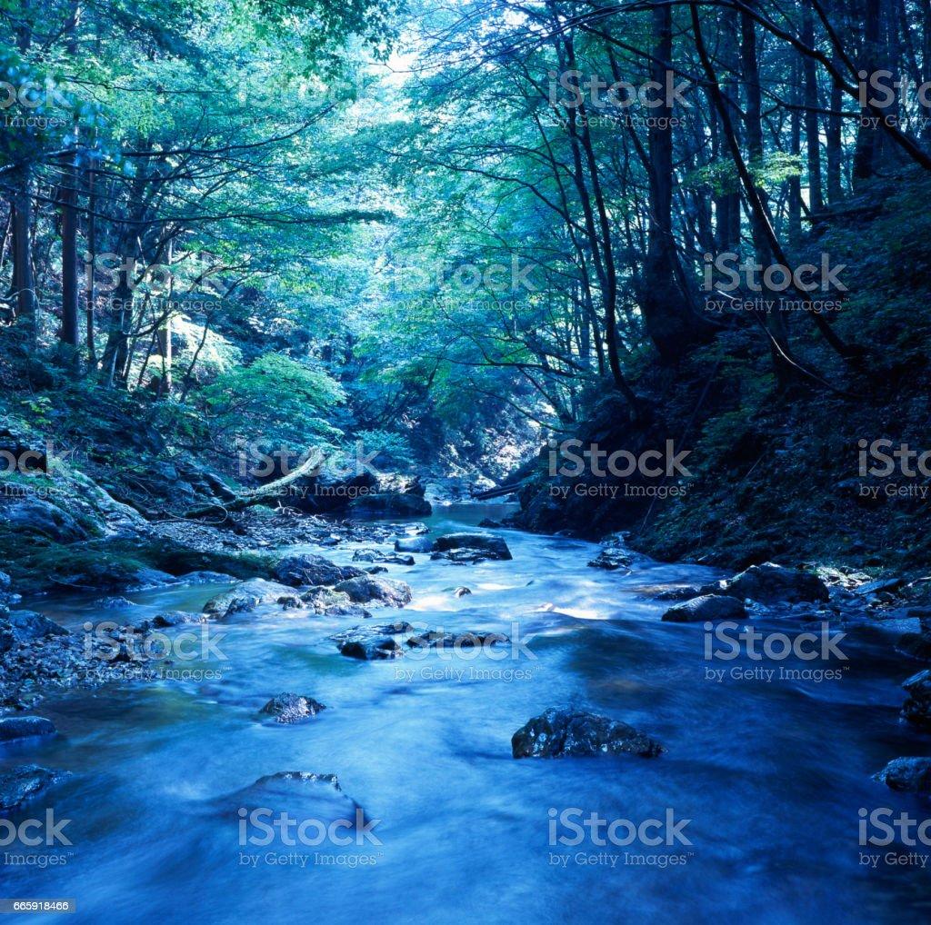 Ashiu forest foto stock royalty-free