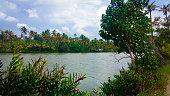 Ashtamudi lake in Kerala filled with green trees on shore. Kerala Backwaters.