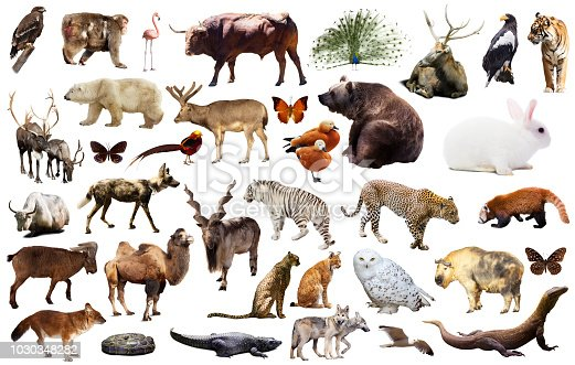 istock asia animals isolated 1030348282