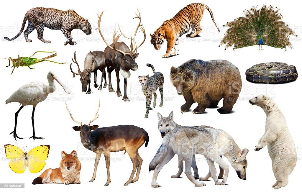 asia animals isolated stock photo