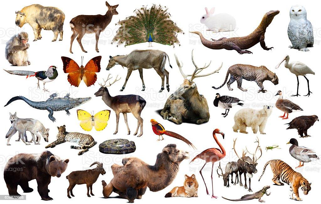 Asien Tiere Isoliert  – Foto
