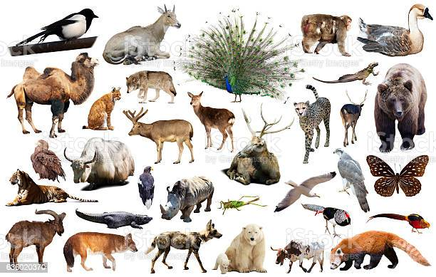 Asia animals isolated picture id636020370?b=1&k=6&m=636020370&s=612x612&h=9rbumctyuge5xepx8rnpgxrms47zeny jh8yncfmiac=