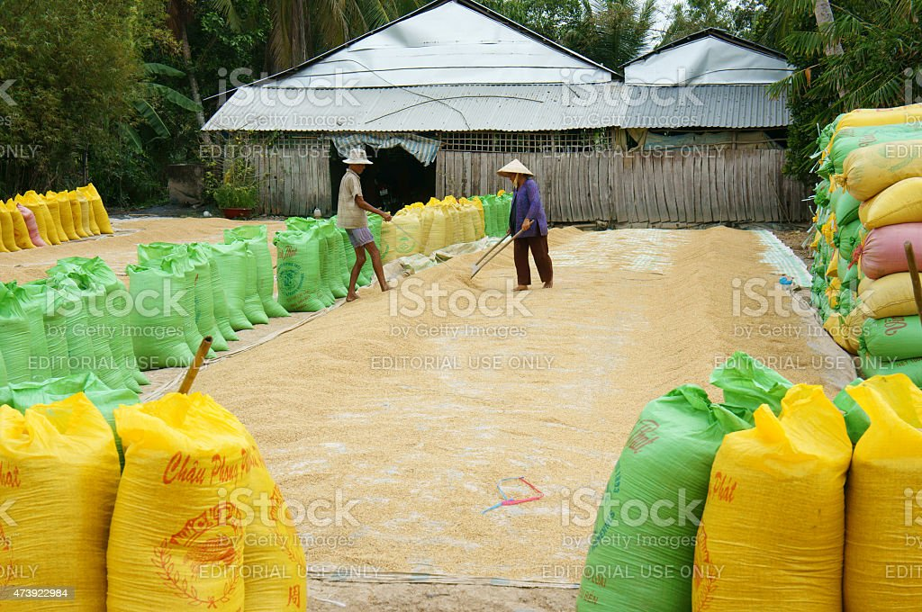 Asia farmer, dry rice, paddy bag, storage stock photo