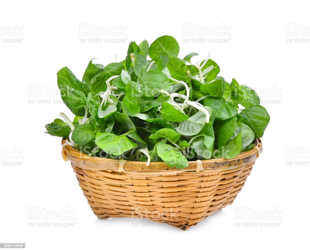 asia fresh spinach green leaves in wooden basket isolated on white background stock photo