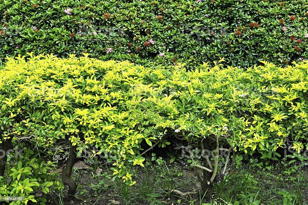 asia garden royalty-free stock photo
