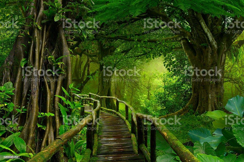 Asia jungle stock photo