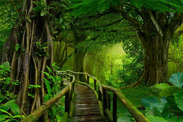 asia jungle - paysage zen photos et images de collection