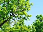 Sky, Springtime, Plant, Summer, Sun