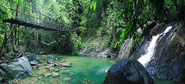 Asia Tailandia jungle paisaje - foto de stock