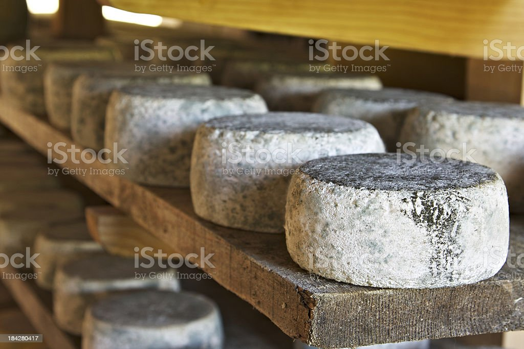 Asiago cheese aging in the factory stock photo