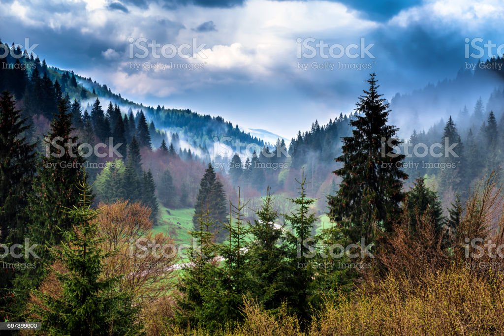 Asiago, il bosco a primavera stock photo