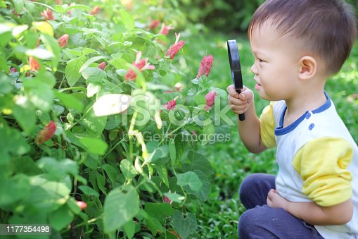 istock Asian 2 - 3 years old toddler boy kid exploring environment by looking through a magnifying glass in sunny day 1177354498