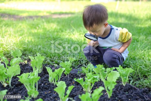 istock Asian 2 - 3 years old toddler boy kid exploring environment by looking through a magnifying glass in sunny day 1177354499