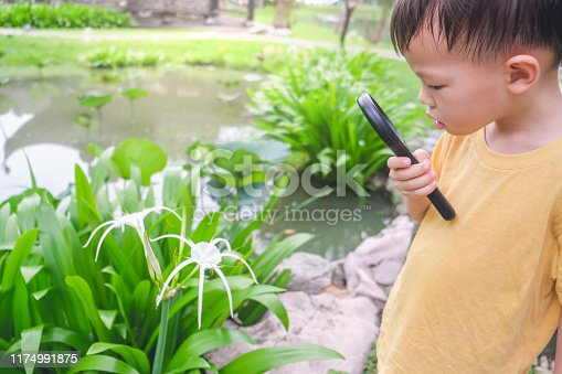 525737167 istock photo Asian 3 - 4 years old toddler baby boy child exploring environment by looking through a magnifying glass in sunny day at beautiful garden 1174991875