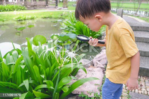 525737167 istock photo Asian 3 - 4 years old toddler baby boy child exploring environment by looking through a magnifying glass in sunny day at beautiful garden 1174991879