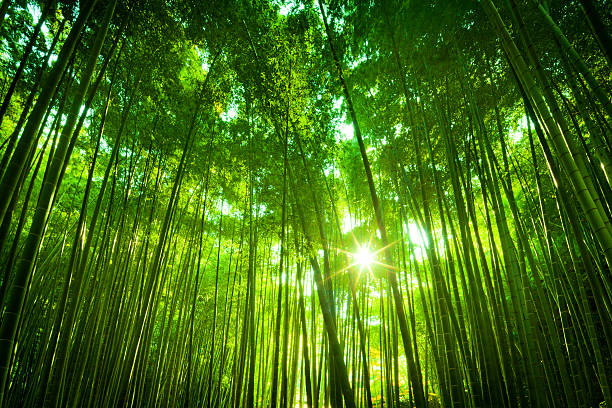 Asian Bamboo Forest圖像檔