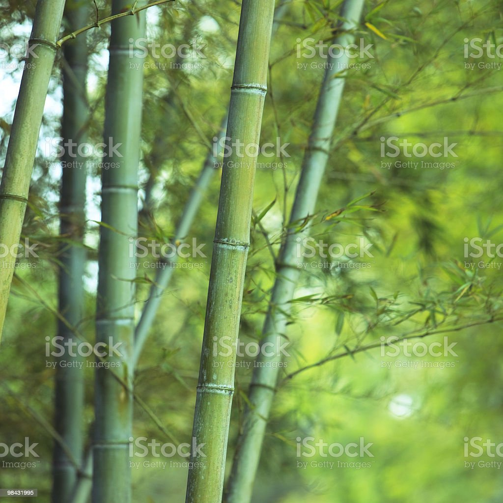 Asian Foresta di bambù foto stock royalty-free