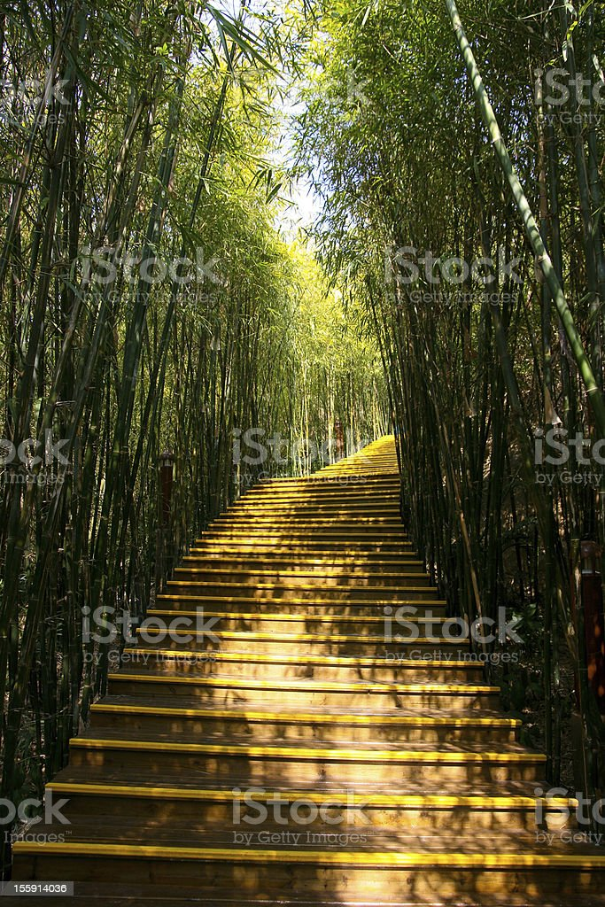 Asian Bamboo forest with sunlight. royalty-free stock photo