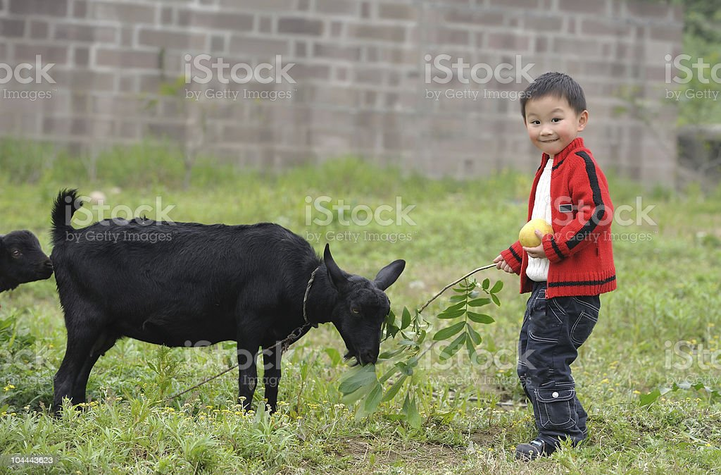 asian boy and black goat royalty-free stock photo