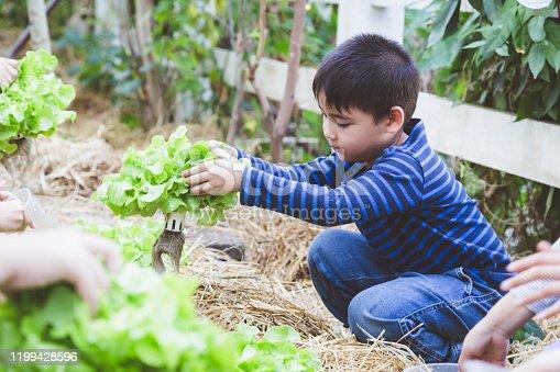Asian boy enjoy planting fresh organic lettuce vegetable in gardens farm, Learning environment and education concept