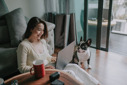 asian chinese beautiful woman work from home having virtual meeting with colleague at living room together with pet french bulldog
