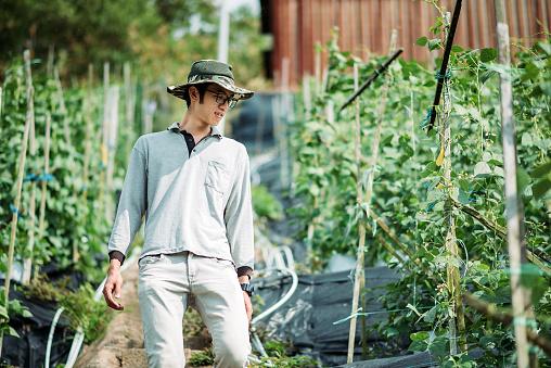 Asian chinese male farmer examining his organic farm growth