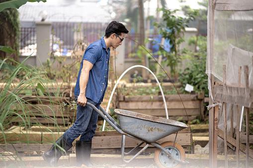 Asian Chinese mature man pushing wheelbarrow while working in his yard