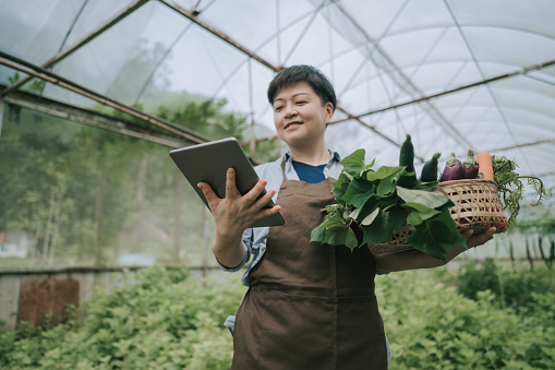 asian chinese mid adult woman examining her organic farm growth with digital tablet