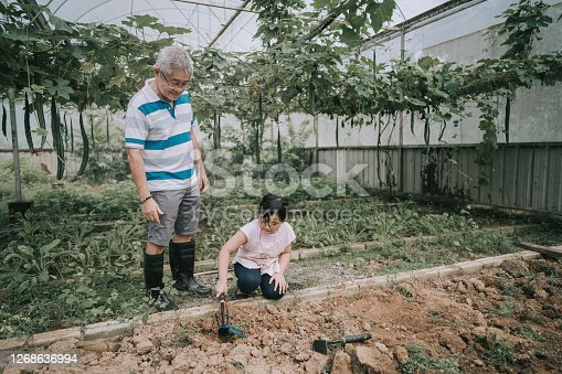 asian chinese young girl helping her grandparent during weekend at the organic farm seeding bonding time
