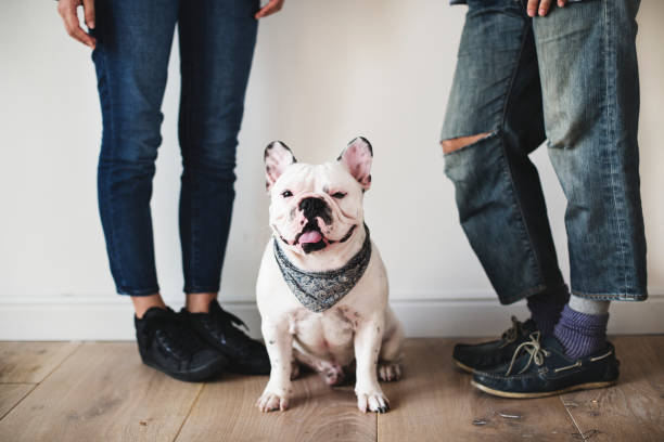 Asian couple with french bulldog picture id941249126?b=1&k=6&m=941249126&s=612x612&w=0&h=xarhsyg0lobd9sgj5md k7nj4uyw0r60z3n5fjvtzng=
