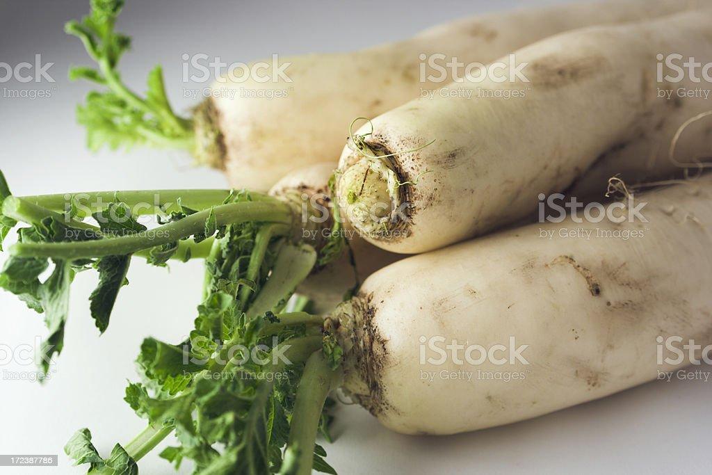 Asian Dikon Radish, Fresh Root Vegetable of Japanese, Chinese Cuisine royalty-free stock photo