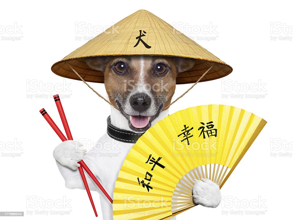 asian dog royalty-free stock photo