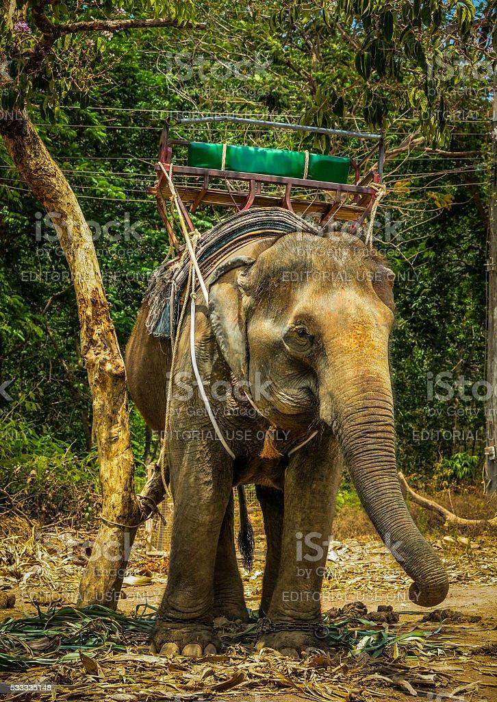 Asian Elephant Carrying Seat, Koh Lanta, Thailand stock photo