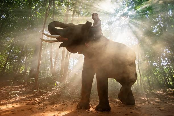 asiatische elefant tanzen ist nation - elefanten umriss stock-fotos und bilder