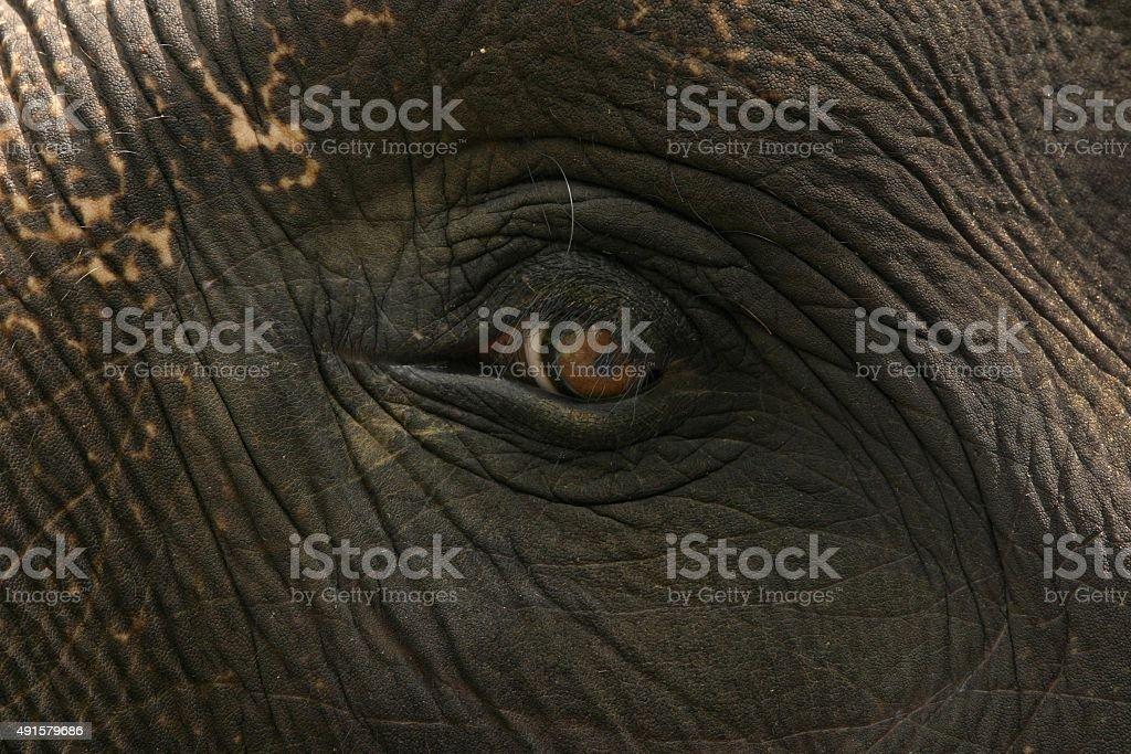 Asian elephant Augen und Haut Nahaufnahme – Foto