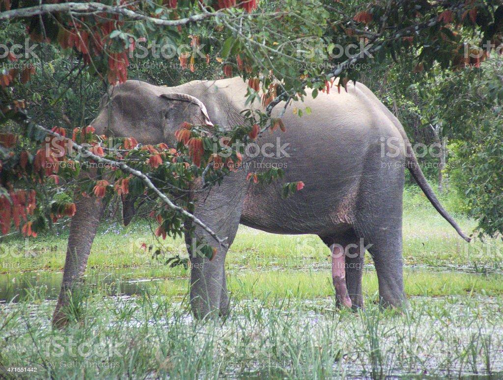 how big is an elephants penis shorty j gay porn