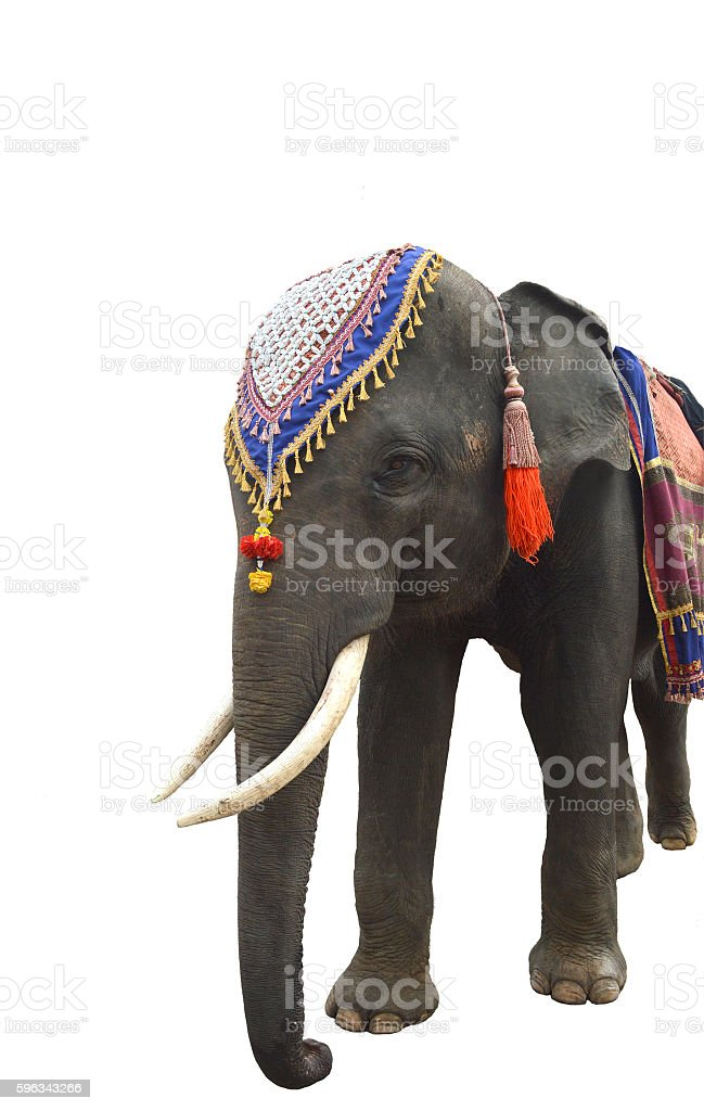 Asian elephant isolated on white background Lizenzfreies stock-foto