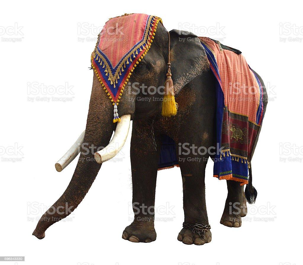 Asian elephant isolated on white background royalty-free stock photo