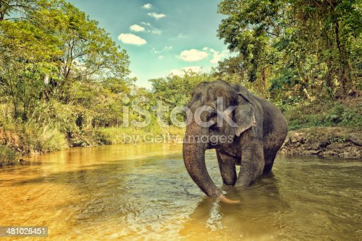 Elephant in jungle crossing a river.