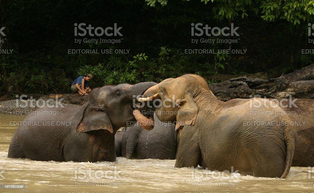Asiatische Elefanten gegenseitig zu bekämpfen, wenn Sie zu Treffen in river – Foto